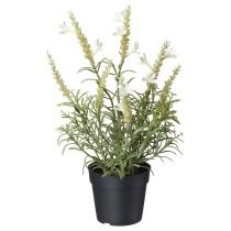 Искусственное растение в горшке ФЕЙКА белый артикуль № 204.295.19 в наличии. Онлайн каталог IKEA Минск. Недорогая доставка и монтаж.